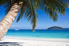 Tropical white sand beach with palm trees Stock Photos