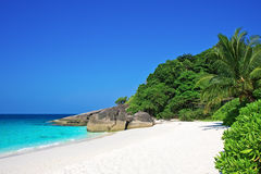 Tropical white sand beach with palm trees Stock Photography