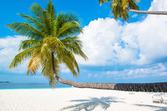 Tropical white sand beach with palm trees Stock Image