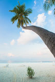 Tropical white sand beach with palm trees Royalty Free Stock Images