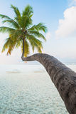 Tropical white sand beach with palm trees Stock Images