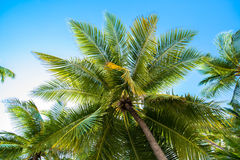Tropical white sand beach with palm trees. In South male atoll of Maldives Stock Images