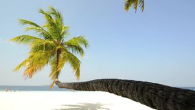 Tropical white sand beach with palm trees. In South male atoll of Maldives stock video
