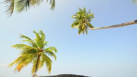 Tropical white sand beach with palm trees. In South male atoll of Maldives stock video footage
