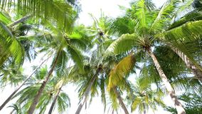 Tropical white sand beach with palm trees. In South male atoll of Maldives stock footage