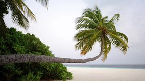 Tropical white sand beach with palm trees. South Male Atoll. Maldives stock video footage
