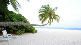 Tropical white sand beach with palm trees. South Male Atoll. Maldives stock footage