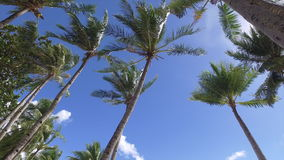 Tropical White Sand Beach. Palm trees on sunny beach stock video