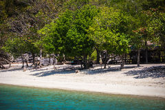 Tropical white sand beach with trees. Royalty Free Stock Image