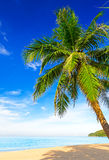 Tropical white sand with palm tree Royalty Free Stock Image