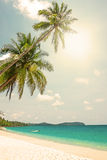 Tropical white sand with palm trees Stock Image