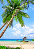 Tropical white sand with palm trees Stock Photo