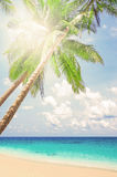 Tropical white sand with palm trees Royalty Free Stock Photos