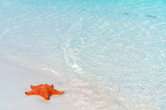 Tropical white sand with red starfish in clear water Royalty Free Stock Images