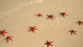 Tropical white sand with red starfish in clear water. Slow mothion. Beautiful big red starfishes lie on the ocean coast. On this video you can see as on the stock video footage