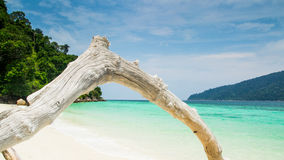 Tropical white sand virgin beach Royalty Free Stock Images