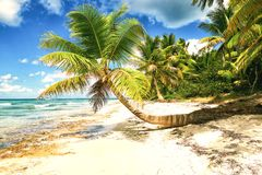 Tropical white sandy beach with palm trees. Saona Island, Dominican Republic Royalty Free Stock Images
