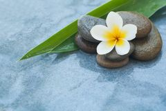 Free Tropical White Spa Flower And Stones With Log Green Leaves Stock Photography - 125330712