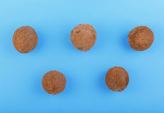 Tropical and whole coconuts on a saturated blue background. Five exotic fruit of coconuts. Sweet coconuts. Vitamins. Stock Photo