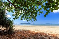 Tropical wild beach Stock Photo