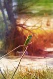 Tropical Wild Bird Royalty Free Stock Photo