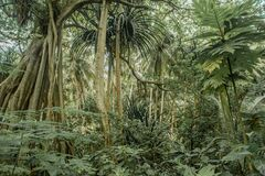 Free Tropical Wild L Jungles Beautiful Landscape With Trees And Green Bushes Around At The Island Stock Images - 170146664