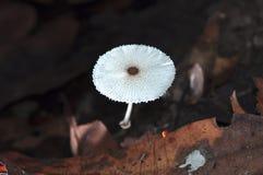 Tropical wild mushroom Royalty Free Stock Photo