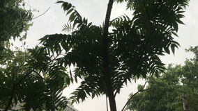 Tropical wind stirs the leaves stock video