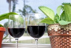 Tropical wine vacation Royalty Free Stock Images