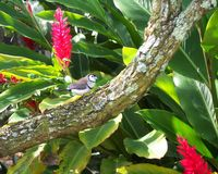 Tropical Wings. This beautiful creature decided to grant me a pose just long enough to capture his or her beautiful colors contrasting to the tropical trees and Royalty Free Stock Photography