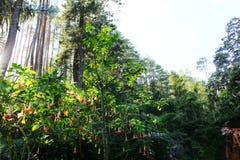 Tropical woods Stock Photos