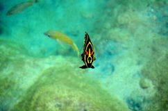 Tropical yellow striped fish at Cozumel Mexico Stock Images