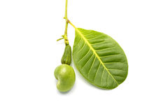 Tropical Young Cashew fruits on white background Royalty Free Stock Photo