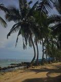 tropicale fotografia stock