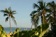Tropicale Fotografia Stock Libera da Diritti