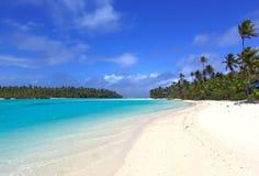 Tropicale fotografie stock libere da diritti