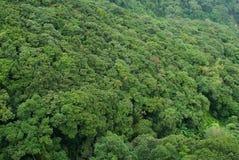 tropicale il più forrest Immagine Stock Libera da Diritti