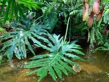 Tropicale, strutturato, foglie verdi nell'acqua fotografia stock
