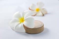 Tropicale un colore di bianco del frangipane dei fiori Immagini Stock Libere da Diritti