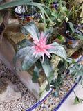 Tropicales de Flores Imagens de Stock
