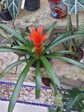 Tropicales de Flores Fotos de archivo libres de regalías