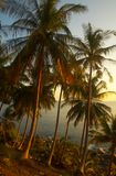 tropicana захода солнца Стоковое Изображение