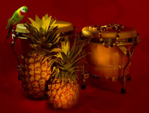 Tropicana Royalty Free Stock Image