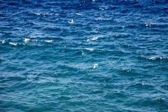 Tropicbird Blanc-coupé la queue, lepturus de phaéton, pêchant dans l'Océan Atlantique, le Madagascar images libres de droits