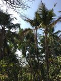 tropici Fotografie Stock Libere da Diritti