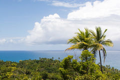Tropici brasiliani Immagini Stock