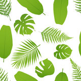 Tropicla seamless pattern with palm and fern. Stock Image