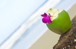 Tropico Fotografie Stock Libere da Diritti