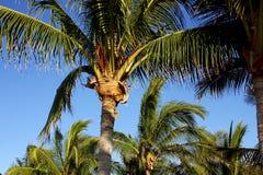 Tropico immagini stock