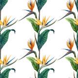 Tropicpattern9 Royaltyfri Bild